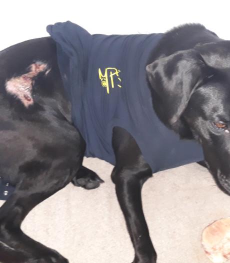 Baasje na mishandeling labrador Beau in Apeldoorn: 'Voed je hond eens beter op'