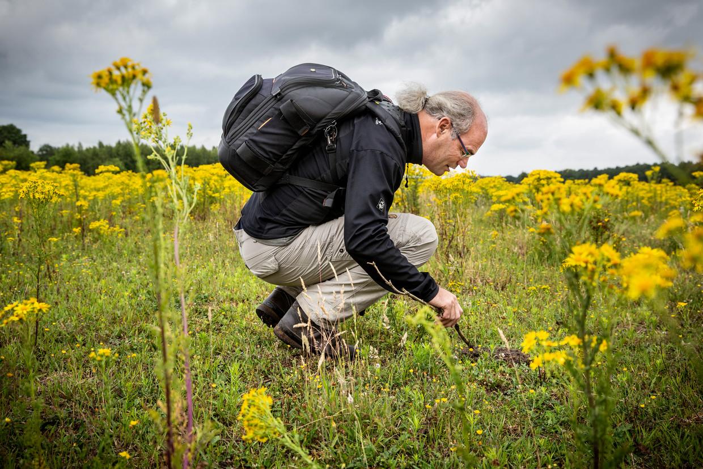 Leo Lennartz van ARK Natuurontwikkeling onderzoekt poep van grote grazers in De Maashorst. Runder- en paardenepoep is een bron van leven maar moet dan wel vrij zijn van bestrijdingsmiddelen en medicijnresten.