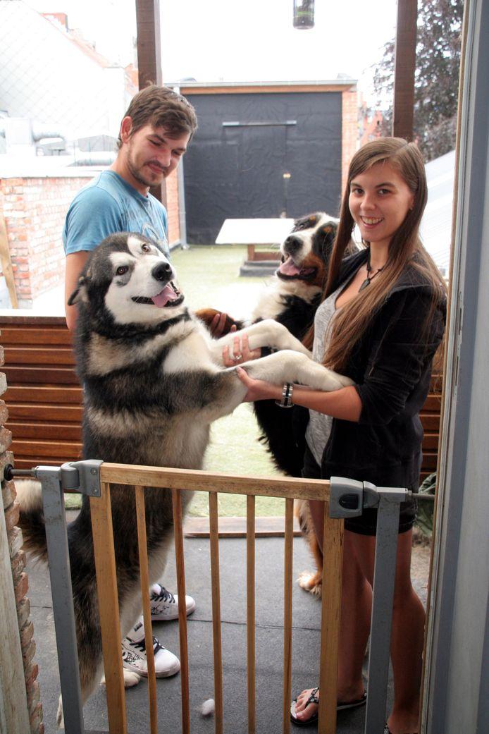 Heikki en Stephanie met hun twee honden, een Alaskan Malamute en een Berner Sennenhond.