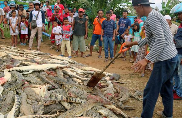 **Woedende menigte doodt bijna 300 krokodillen in wraakactie**