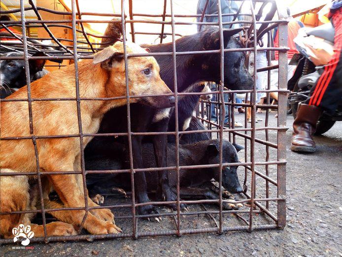 Honden in kooien aan de markt van Tomohon, archiefbeeld.