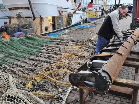 Drama voor Nederlandse vissers: Brussel verbiedt pulsvisserij