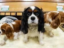 Adoption d'animaux : la commune de Courcelles est pionnière en Wallonie!