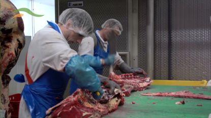 Slachthuis Verbist zet mes in jobs na vleesschandaal
