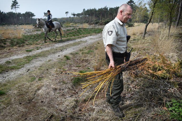 Boswachter Sjaak Smits vindt gedumpt snoeiafval in een natuurgebied. Beeld Marcel van den Bergh