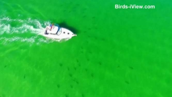 Tientallen haaien zwemmen rond boot in Florida