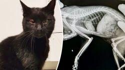 """Twix doorzeefd met hagelbolletjes: """"Jagers hebben onze kat beschoten"""""""