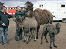 Boete dierenverhuurder voor sjoemelen bij registratie biggen