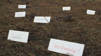 """Districtsraadslid onthutst over rooien toekomstbos, volgens stad kon het niet anders """"maar in 2020 planten we er nieuwe"""""""