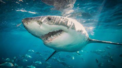 Satelliet moet haaien beschermen