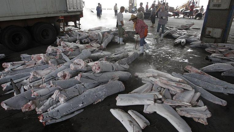 Haaienlijken ontdaan van de vinnen in Taiwan. Beeld reuters