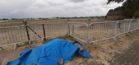 Politie onderzoekt beelden van verwaarloosde paarden Haarsteeg, één dier dood aangetroffen