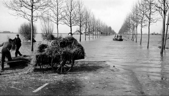 De Tholenseweg tussen Tholen en Halsteren is ondergelopen. Op de voorgrond hulpverleners die voer gaan brengen naar vee dat op hoger gelegen delen van de polder de watersnoodramp heeft overleefd.