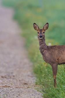LTO Noord gaat mee in faunaplan provincie Flevoland