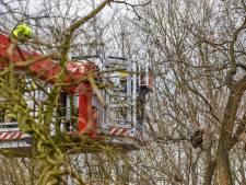 Kat Noor gered na zeker 30 uur in boom boven spoor in Oosterbeek