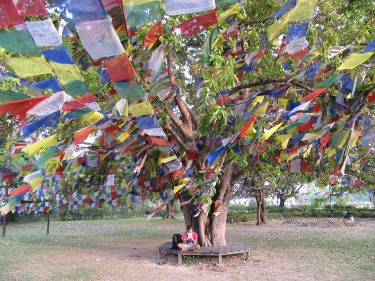 Heilige boom naast de Maya Devi Tempel in Lumbini Beeld Jeroen van Raalte