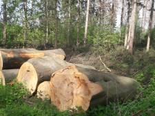 'Bomenkap bos Soest vanwege veiligheid'
