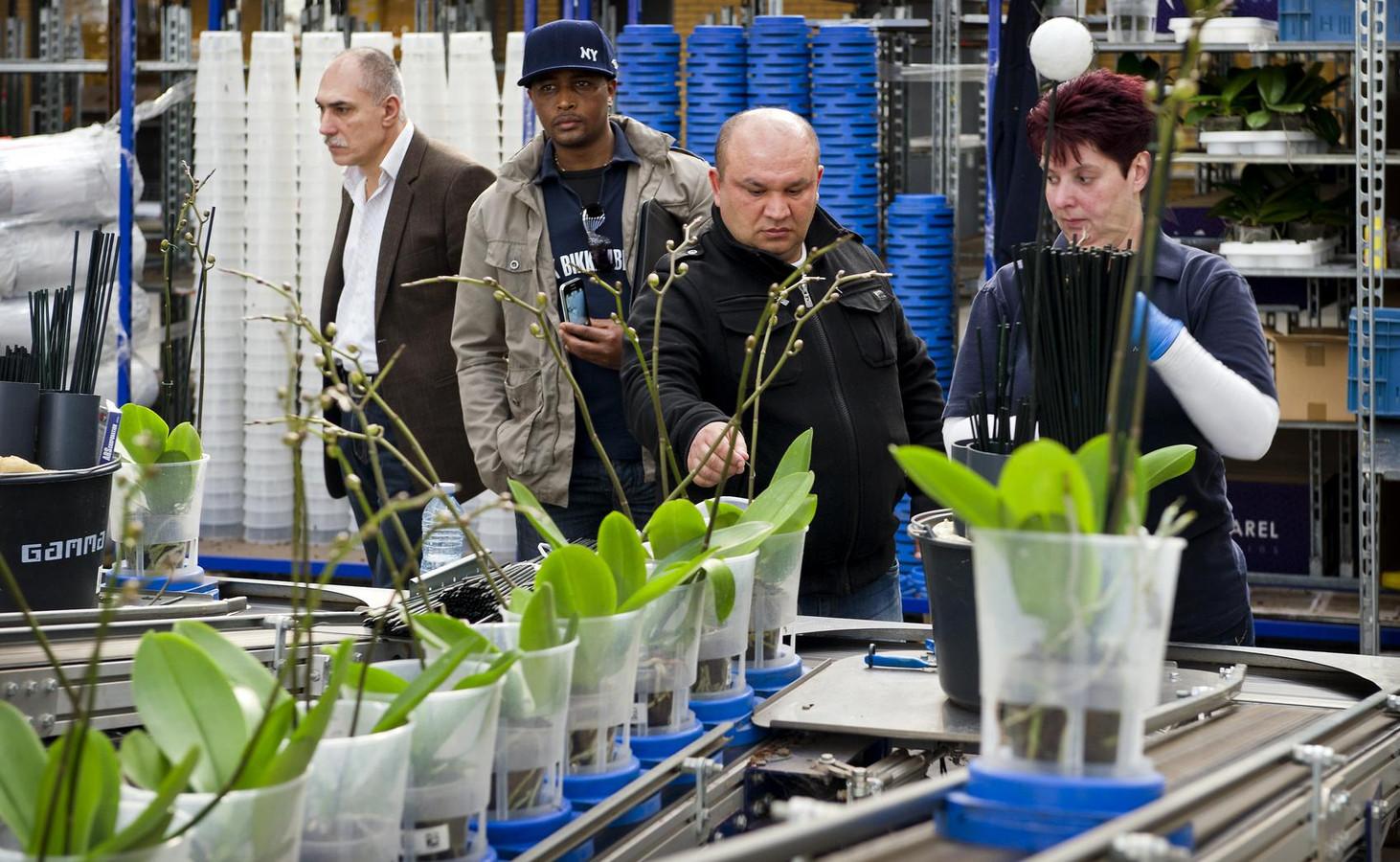 In 2012 deden gemeenten ook al een poging werklozen aan het werk te krijgen in de Westlandse kassen.