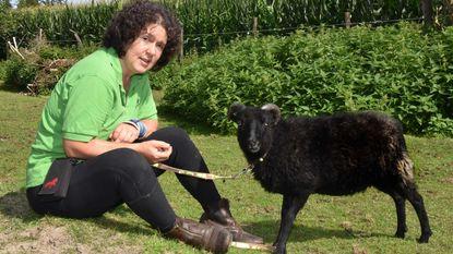 """Niet alledaags opsporingsbericht: """"100 euro voor wie mijn schaap terugbrengt"""""""