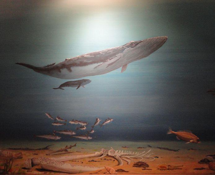 Een reconstructie van de oervinvis waarvan resten zijn gevonden in Liessel.