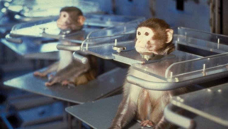 Apen in een laboratorium