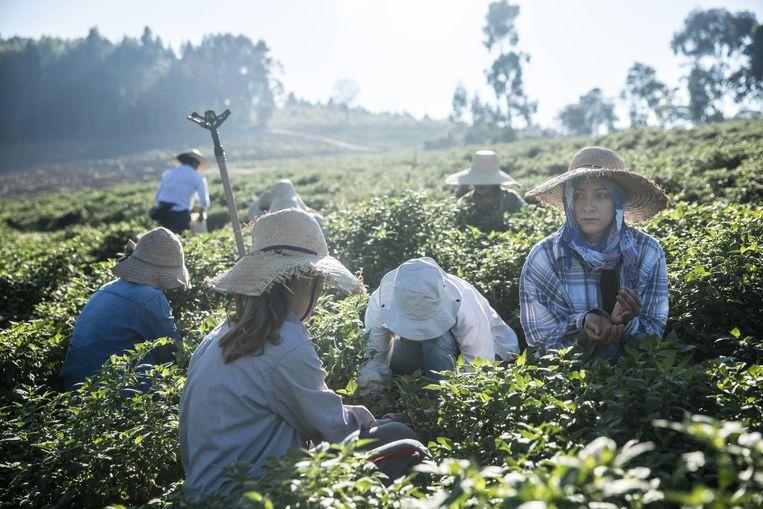 De vrouwen uit Noiva do Cordeiro aan het werk op het land.  Beeld Marlena Waldthausen
