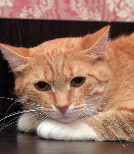 Meppel vreest voor kattenkiller: 'Een zieke geest die onze dieren afmaakt'
