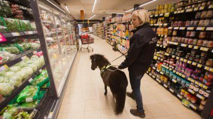 Het eerste blindengeleidepaardje van Europa is voor Brugse Monique