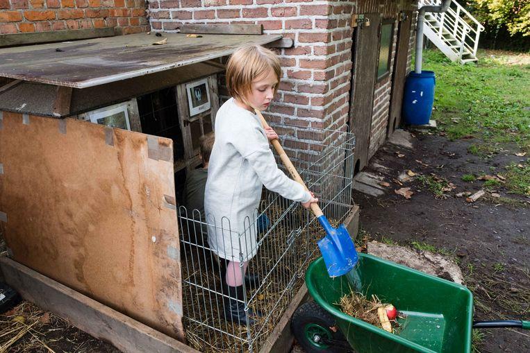 Ook het hok van de vaste schoolkonijnen Knabbel en Rikki moest worden schoongemaakt.