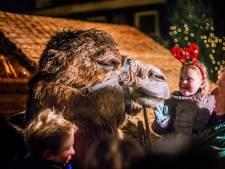 SP wil geen levende dieren meer op Kerstmarkt Dordt