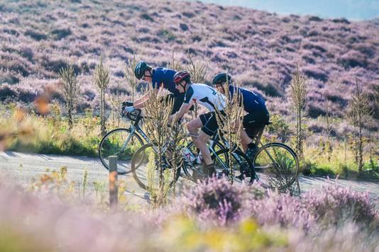Nog een beeld uit 2019. Deelnemen aan de Time Trial op de Posbank betekent ook genieten van de bloeiende heide.