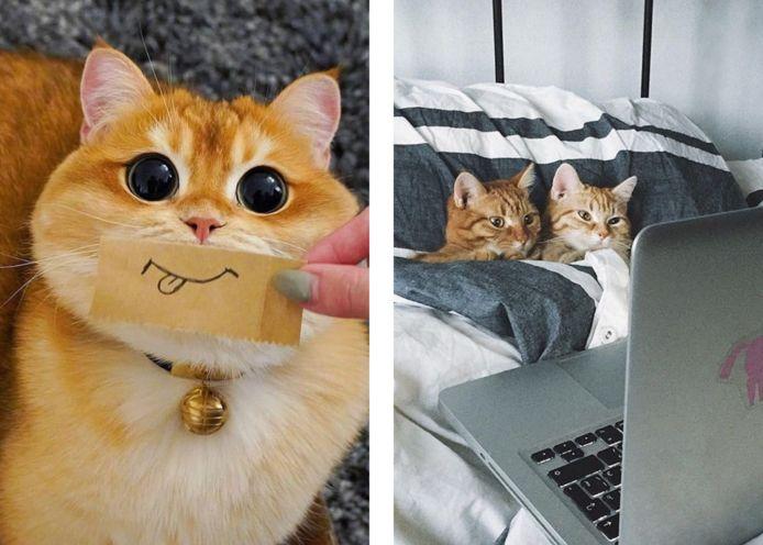 Op de twitteraccount 'Why you should have a cat' vinden kinderen heel wat fotografische argumenten om hun koppige ouders mee te overtuigen.