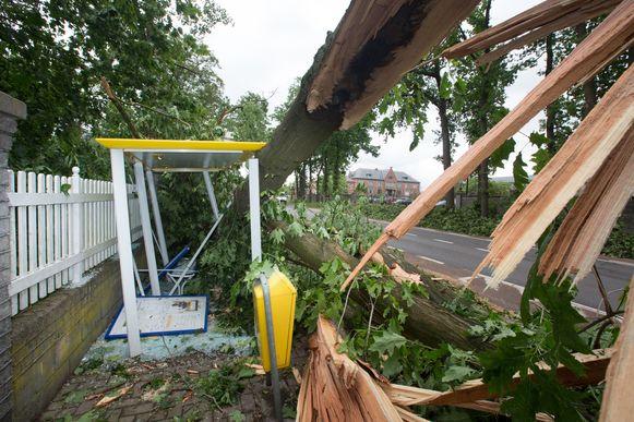 Stormschade park van de directeur in Beringen
