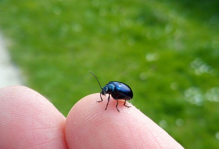 Een lichtjes bijgesneden close-up van een insect zonder HDR of bokeh-effect.