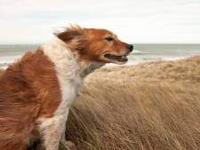 Morgen kans op zeer zware windstoten langs de kust