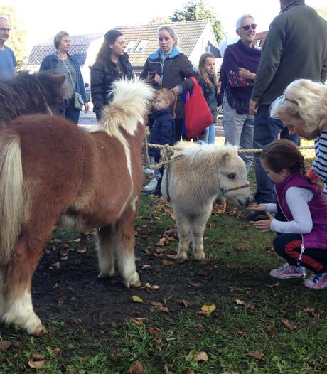 Paardenmarkt: veel aaien, weinig handjeklap