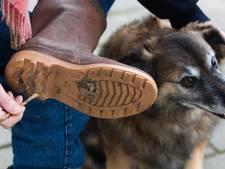 Hondenbezitters in Gemert-Bakel opgelet: vaker controle op hondenpoep