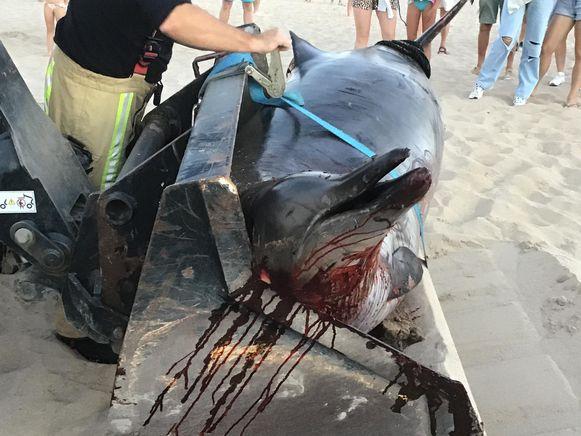 Het aangespoelde dier op het strand.