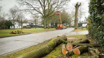 Buurt boos voor 'plotse' bomenkap