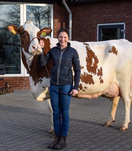 Boerin Mariëlle uit Almelo fokt met Toosje 724 de beste roodbonte koe van Nederland: 'Heel blij en trots'
