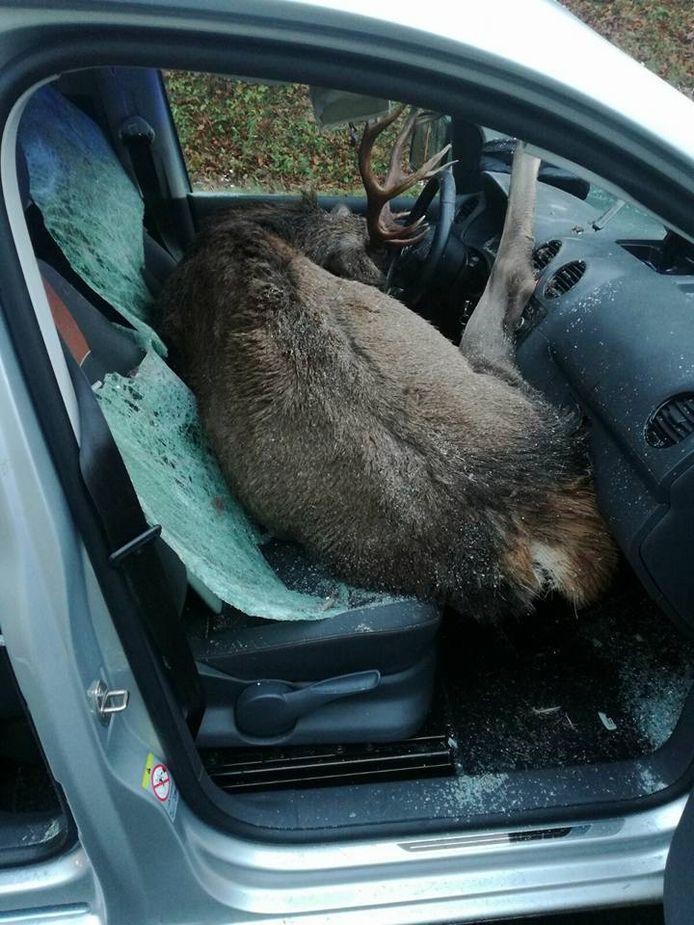 Foto's tonen het hert bovenop de bestuurder en bijrijdersstoel, het gewei gedeeltelijk ingeklemd in het stuurwiel