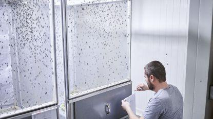 Insectenkweker worden? Je leert het voortaan op YouTube