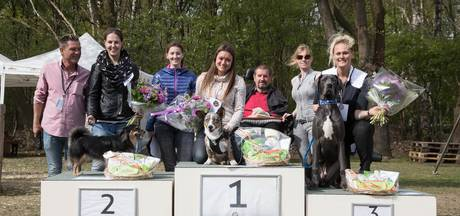 Bolt uit Reusel 'mooiste hond van Nederland'