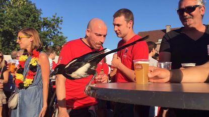 Ekster Fonske is verzot op bier én de Rode Duivels