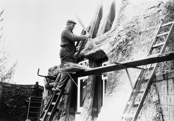 Rietdekkers van Van Ooi uit Boskoop aan het werk bij een molen aan de Rotte in Moerkapelle in 1976.