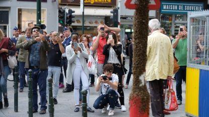 Nieuwe 'toeristische attractie' in centrum Brussel: bijenzwerm op verkeerslicht