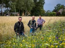 Bloemenpracht in Holten vroeger ondenkbaar: 'Als boer wilde je toch geen bleumkes verbouwen?!'