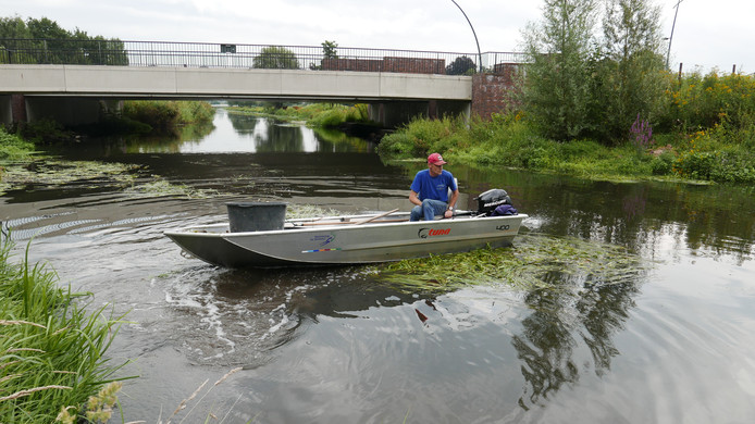 André van Breugel van Waterschap De Dommel tuurt op de Dommel in Boxtel naar dode watervogels.