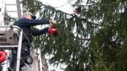Gemeente Brakel zoekt een kerstboom, maar wil hem wel gratis