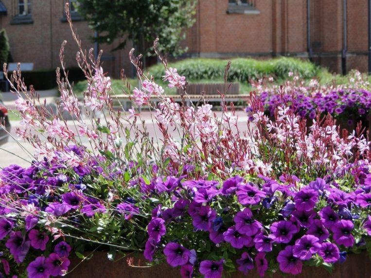 Eén van de bloemenprojecten in Beringen